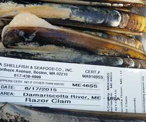 Solines (razor clams)
