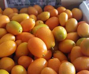 Kumquats for rabbit and kumquat dish